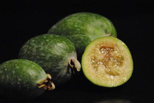 Feijoa/Pineapple Guava