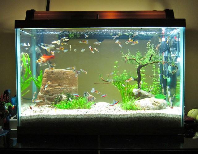 Aquarium aquarium calculator gallons how to calculate for Standard fish tank sizes