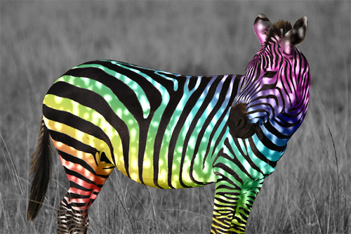Animal Farm Wallpaper Colorful Zebra A Gallery On Flickr