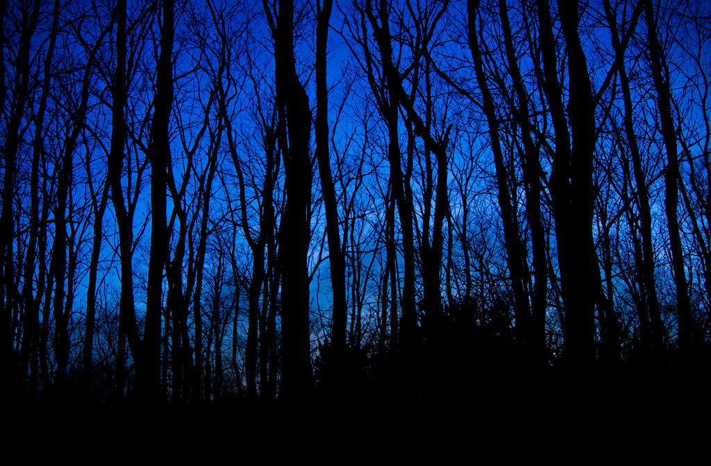 New 3d Wallpaper Hd Blue Forest Josh152 Flickr