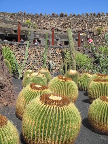 Cacti, Jardin de Cactus, Lanzarote