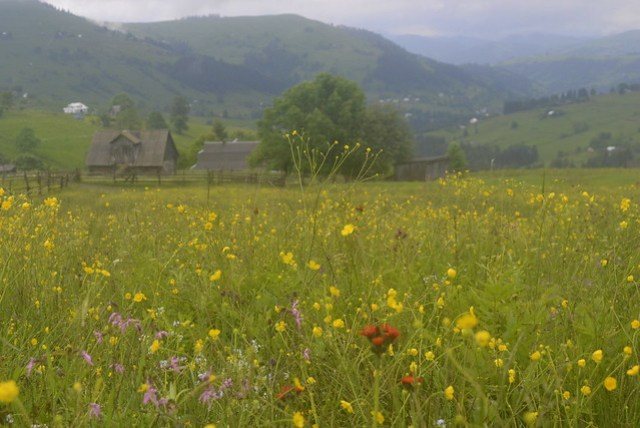 Horseback Riding Trip in the Carpathians _ Flower covered field