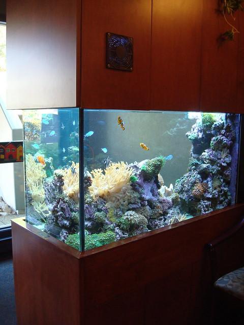 Saltwater aquarium 90 90 gallon community reef aquarium for 90 gallon fish tank for sale
