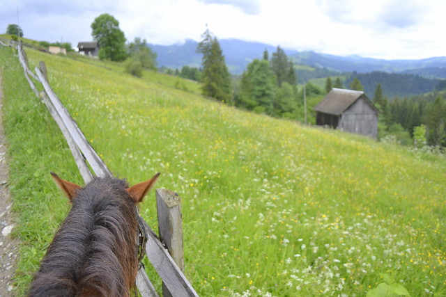 Horseback Riding Trip in the Carpathians _ The view from horseback