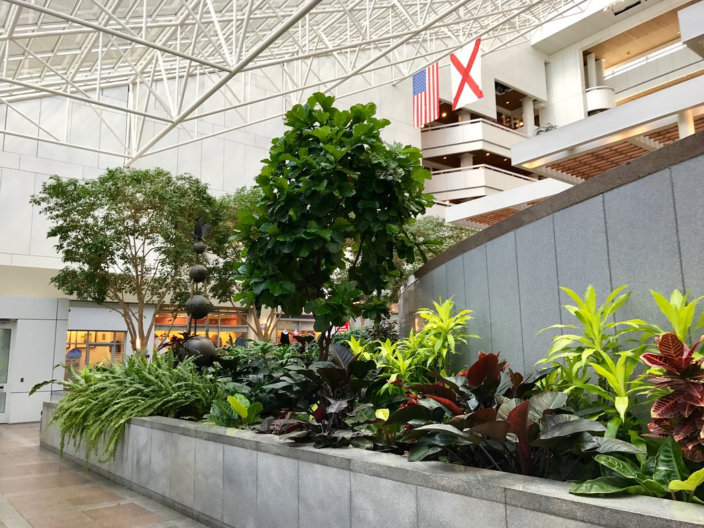 Plant Interior Corporate And Commercial Interior Plant Services