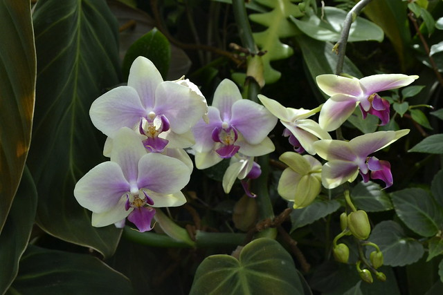 Write about Singapore _ Orchids