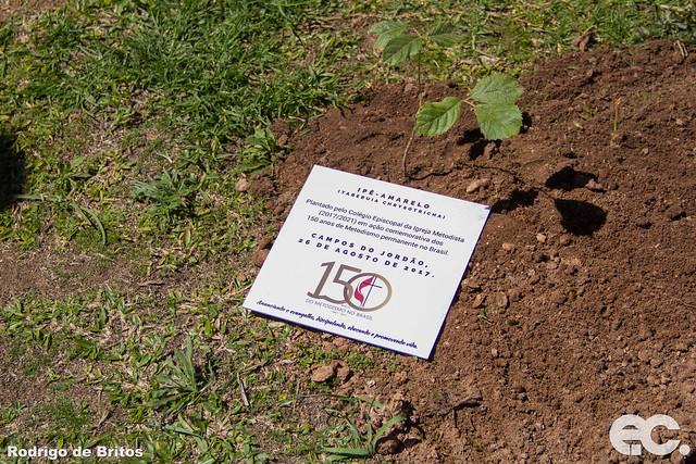 Campanha Plante uma árvore