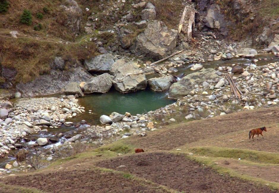 Horse grazing near Neelam river in Gurez