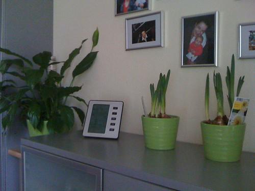 Voorjaar in huis gehaald!!! 3 nieuwe plantjes...