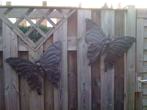 De vlinders hangen aan de schutting!!! Leuk, al zeg ik het zelf...