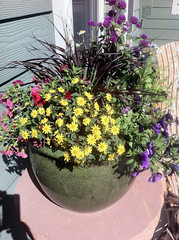 Patio Pot of Flowers