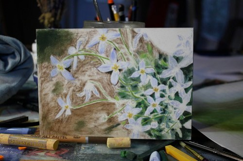 Bluets in progress