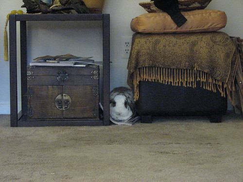 betsy's new hiding spot