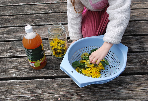Making Dandelion Vinegar
