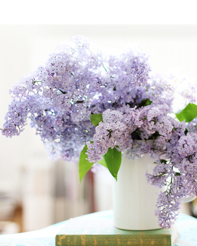 Gee lilacs are pretty