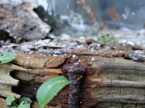 Jar No 31 - rusty nail