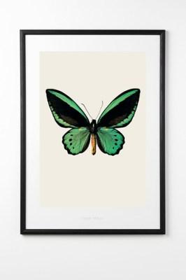 green butterfly print rockett st george