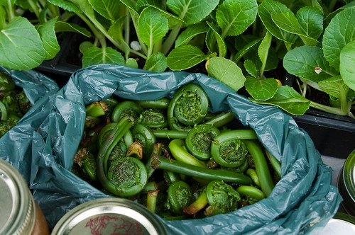 Opening Day of Trout Lake Farmers Market - fiddleheads