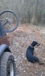 Tired trail dog
