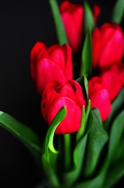 Mmm, Tulips