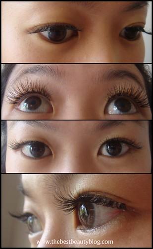 Black Leopard Hd Wallpaper Natural Long Eyelashes Asian