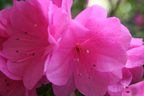 Flowers in NOLA