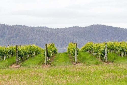 Tassie vinyards and wineries