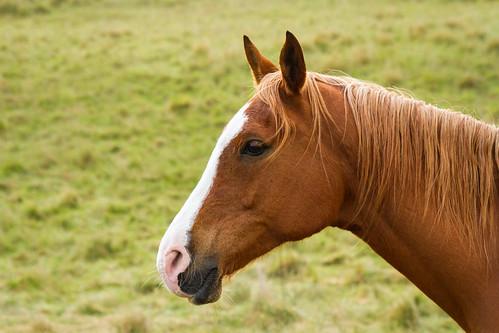 Herbert the curious horse