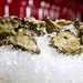 Fresh Oysters | Oyster | 475 Howe Street