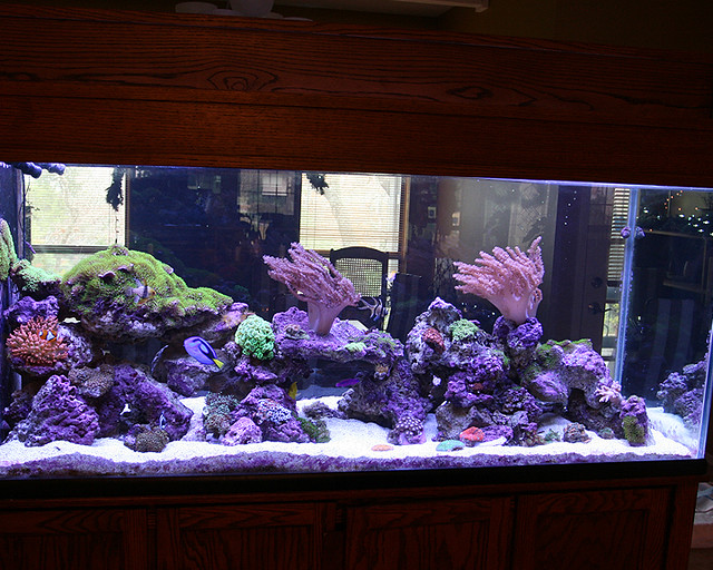 200 Gallon Marine Aquarium with Stunner LED Strips | Flickr   Photo