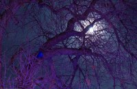 Denver Zoo Lights - Full Moon