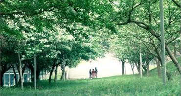 旅行︱台中沙鹿.靜宜大學雪白流蘇林~交織成美麗的新娘嫁紗