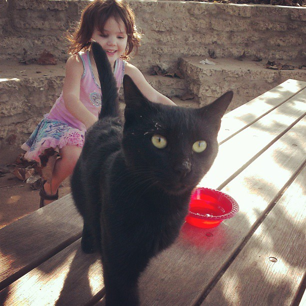 She made friends with a stray cat at the park. She named him Branch and asked if we could keep him forever.