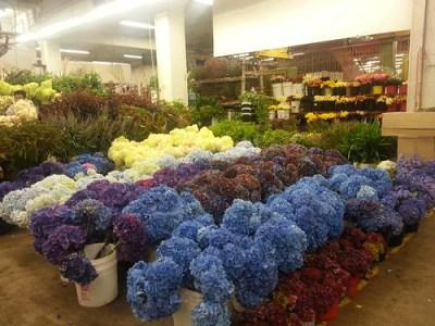 洛杉矶花卉市场的俄勒冈海岸花卉.