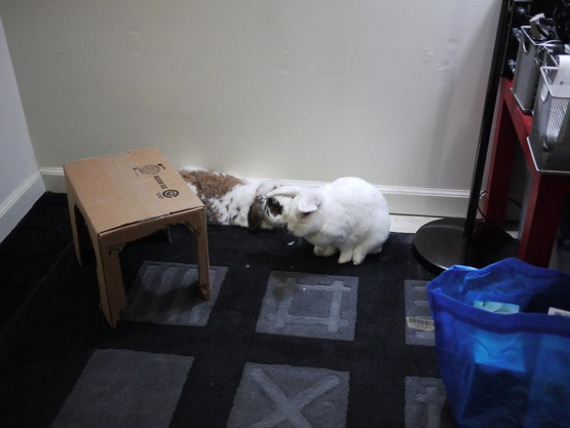 buns are displeased with the lack of furniture
