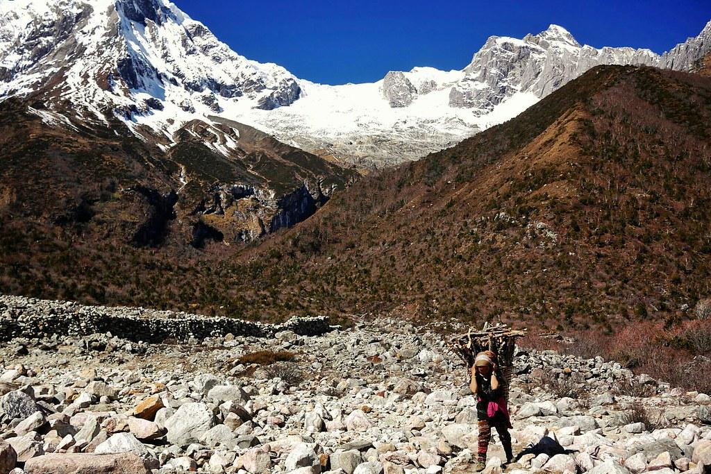 Tibetan woman collects wood under Manaslu
