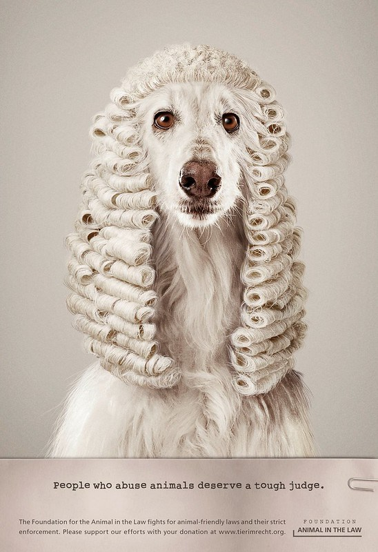 Foundation Animal In The Law - Dog Judge