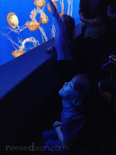 Atti watching Jellyfish