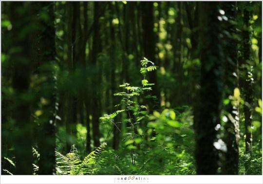 De bossen van het Leudal in de volle zon