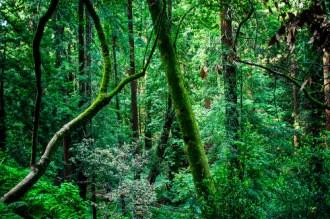 Muir Woods National Monument - Héctor García