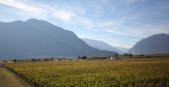 Orofino Photo of vineyards and mountains