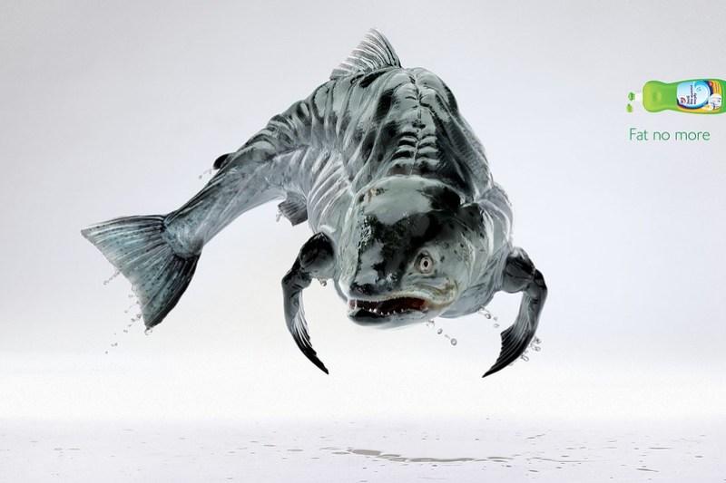 salmon_aotw