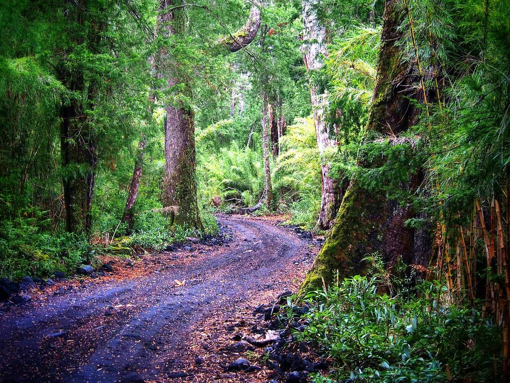 National Park Lanin