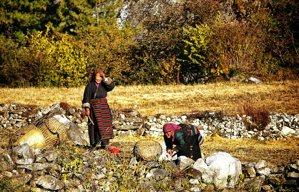 Tibetan women working
