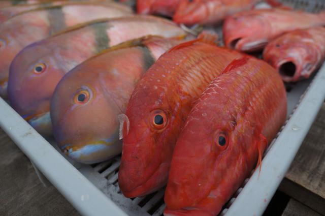 澎湖*南海遊客中心&澎湖魚市場 @ Nicole的生活日記 :: 痞客邦