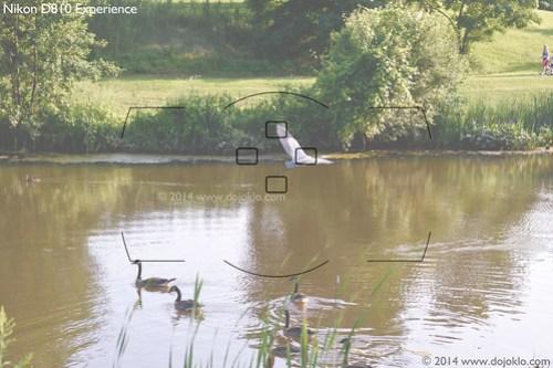 Nikon D810 autofocus af group area mode learn use setup quick start tips tricks viewfinder bif bird heron
