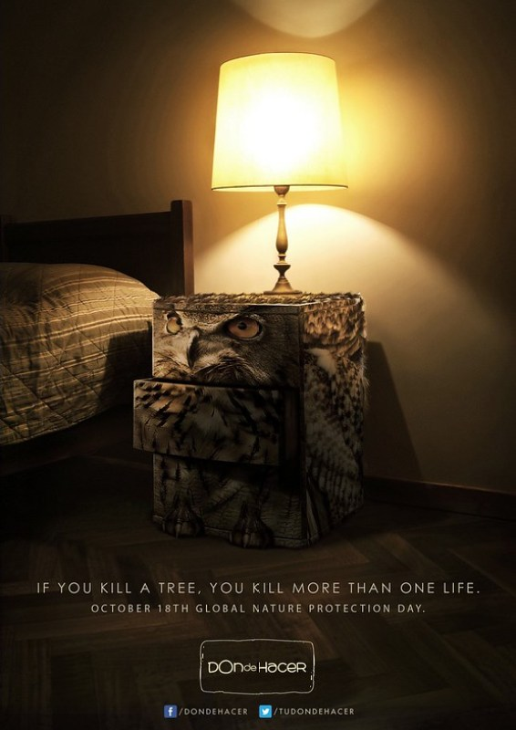 Don de Hacer - If you kill a tree, you kill more than one life Owl