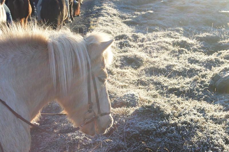09/11 Paardrijden