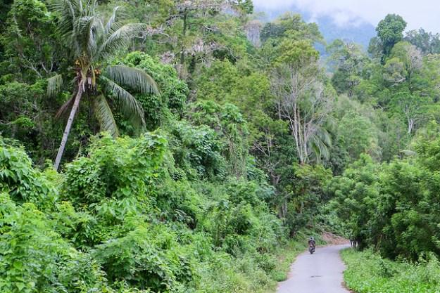 Jungle road near Sawai