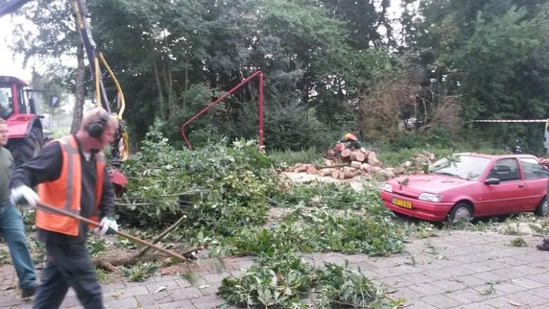 20150828141259 heerenveen boom 4